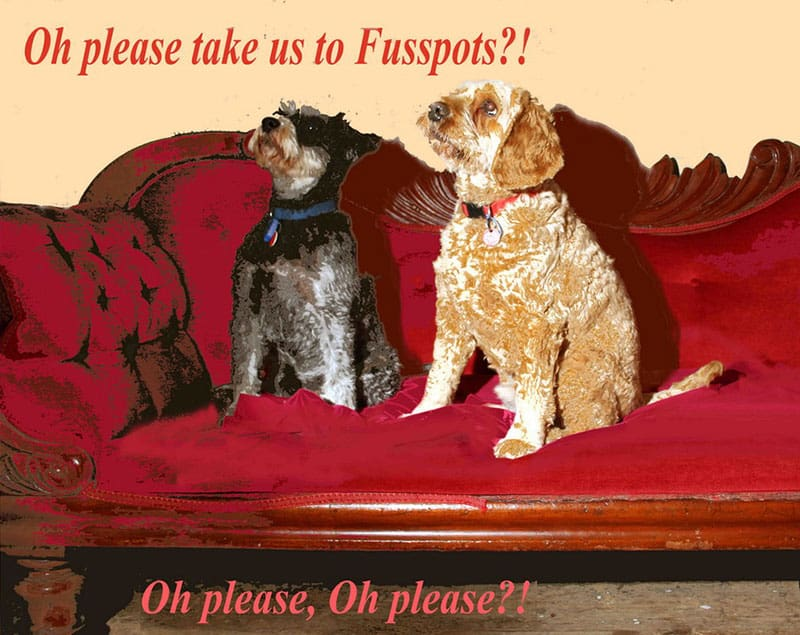 Fusspots-dogs-on-couch